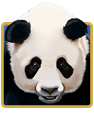 IGT Slots 100 Pandas For Money