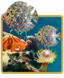 play ocean pearls slot game online